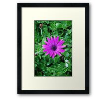 Hello Flower Framed Print