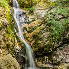 Abruzzo National Park - Waterfall by Renzo Re