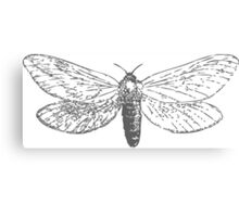 Vintage Moth Canvas Print