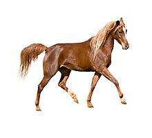 Horse dance  Photographic Print
