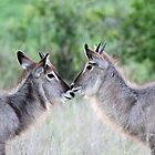 Face-Off ! by jozi1