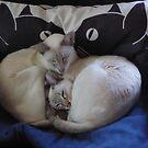 Misha & Maya by simonescott