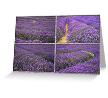 The Lavender Farm Greeting Card