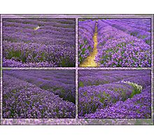 The Lavender Farm Photographic Print