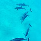 Dolphin in Hawaii by AkimaTsurugi