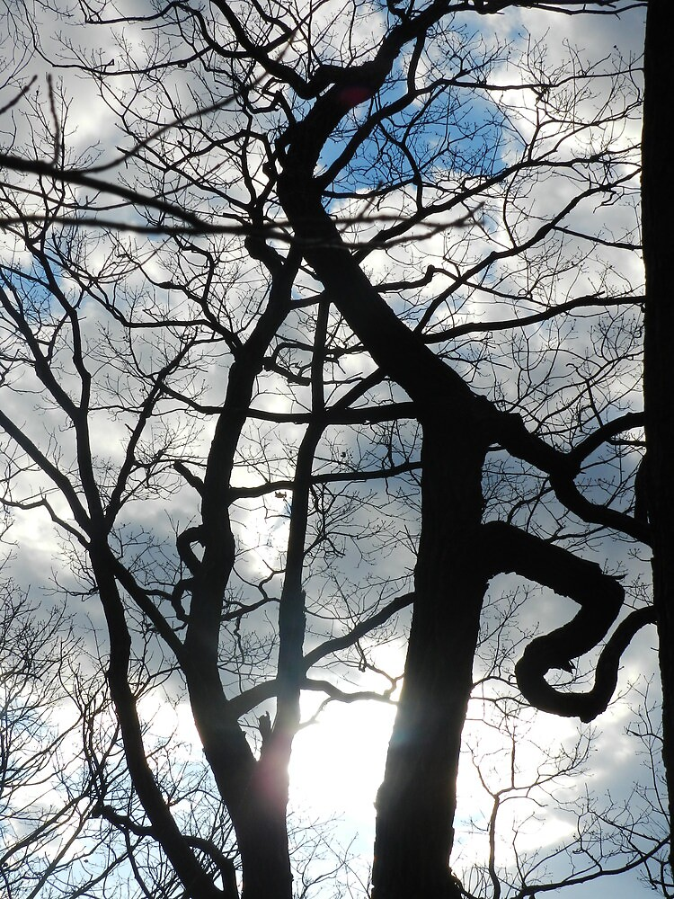 Sky Through Crooked Trees by TrendleEllwood