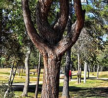 The Tuning Fork Tree by vigor