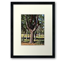 The Tuning Fork Tree Framed Print