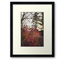 nature in autumn cloak Framed Print