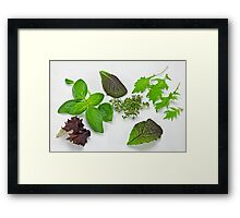 green Salad and spices Framed Print