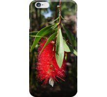 Bottlebrush at Cottesloe, WA iPhone Case/Skin