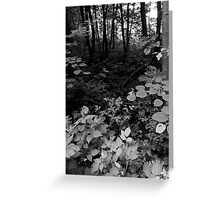 Swampy Woods Greeting Card