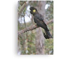 Yellow Tailed Black Cockatoo (Female)  Canvas Print