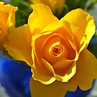 Yellow rose by freshairbaloon