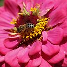 Flower power by freshairbaloon