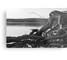 Northern Drift Wood Metal Print