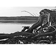 Northern Drift Wood Photographic Print