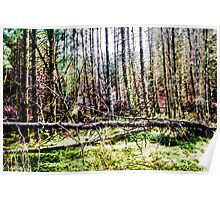 Grungy Texture of Trees Poster
