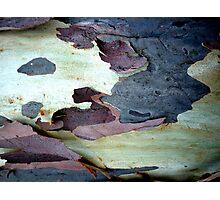 Bark Abstract # 10 Photographic Print