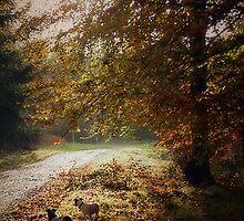 Autumn Sun by Simon Harris