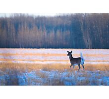 Elegance of a deer  Photographic Print