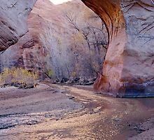 Coyote Natural Bridge by Paul Magnanti