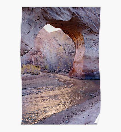 Coyote Natural Bridge Poster