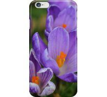 Purple Spring Crocuses iPhone Case/Skin