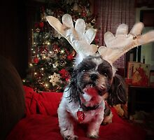 What do you mean I have to take Rudolph's place? by vigor