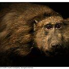 Olive Baboon by Dennis Stewart