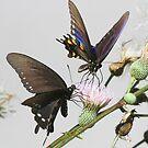 Butterflies  in the park by jozi1