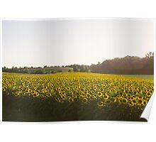 Calkins Road Sunflower Field Poster