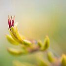 NZ Flax by Jenny Dean