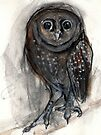 Transient Owl by WoolleyWorld