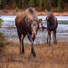 Ma Moose and Calf by JamesA1