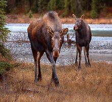 Ma Moose and Calf by JamesA1