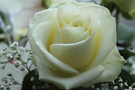 Favourite Rose by karina5