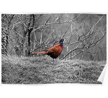Winter Pheasant Poster