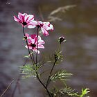 Cosmos with Visitor by Linda Gleisser