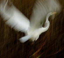 Bird in Flight by Bevin Allison