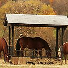 Grazing Without A Saddle by RockyWalley