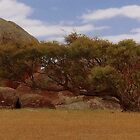 Leaning Tree at Murphy's Haystacks by myraj