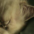 Little cat by Neutro