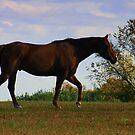 Gallop by RockyWalley