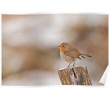 Robin Red Breast ~ Merry Christmas Poster