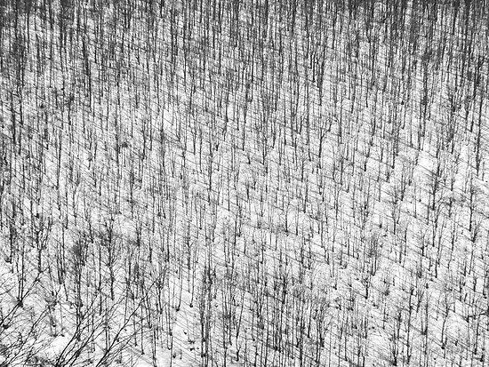 Winterscape by Milos Markovic