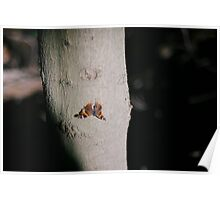 Moth at Sunset Poster