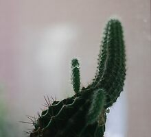 Little Cactus by Ryan Leatzaw