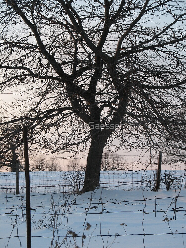 Oak in winter behind wire fence  by Liesl Gaesser