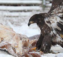 Eagle Food by KansasA